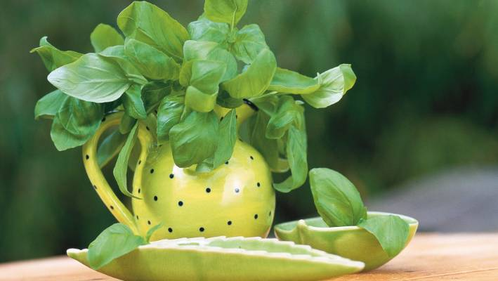 Plant Basil Now So You Can Make Homegrown Pesto This Summer