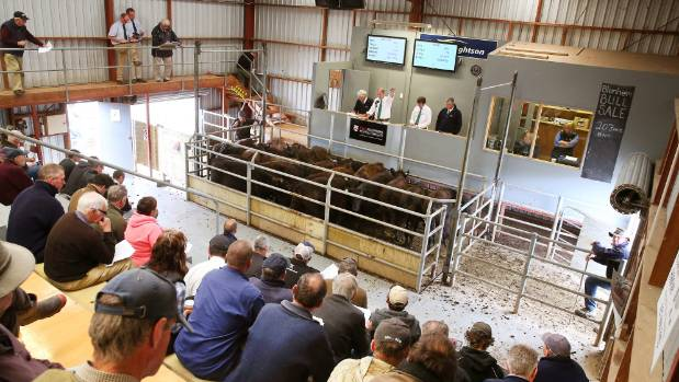 PGG Wrightson is involved in everything from seeds to livestock. Here their auctioneers are at work at the Marlborough ...