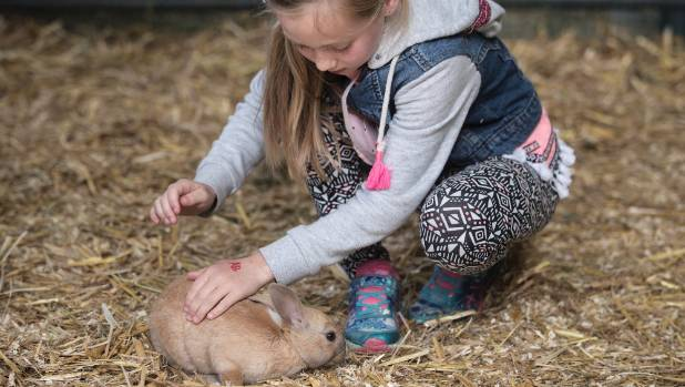 Annaliese Baker, 8, gets an opportunity to get up close to a rabbit in the livestock pavilion.