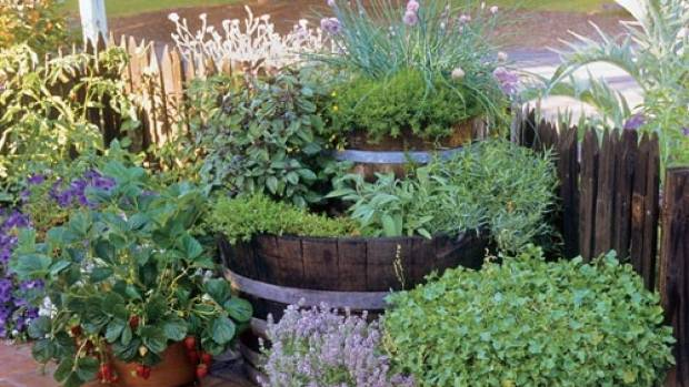 Many common garden herbs can be used for house cleaning if you know how.