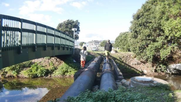 The group has already begun planting along the Korokoro Stream ahead of the February public art festival.