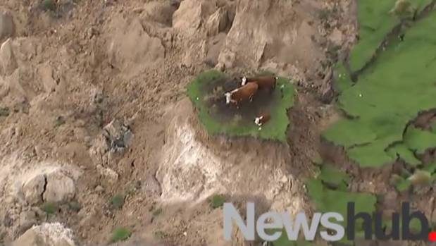 Footage shows two cows and a calf completely cut off after a major slip.