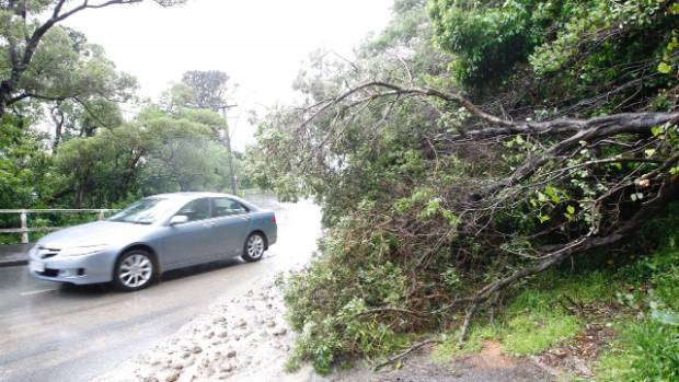 Wellingtonians woke to torrential rain. A large tree has come down on Sutherland Rd, Lyall Bay, Wellington.