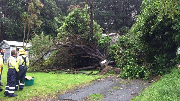 A tree ripped out of the ground in Paekakariki, in the Kapiti Coast.
