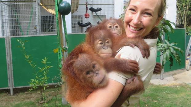 Amy Robbins with baby orangutans at the Sumatran Orangutan Conservation Programme's centre in Sumatra. These youngsters ...