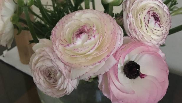 Sutherland's favourite flowers are ranunculus or peonies.  She bought these pink ranunclus from her local market.