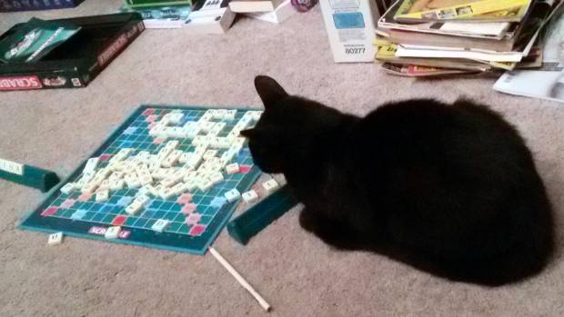 Finally, here's Bopor, who felt the need to investigate a Scrabble game but cut up rough when told that the letters have ...
