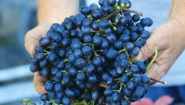 Mike Sparks called in West Auckland winemaker Stephen Nobilo to advise on varietals; they sourced the syrah stock from ...