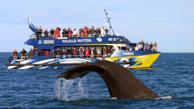 Whale Watch is still unable to operate its boat trips and is urging the Government to consider all options to restore ...