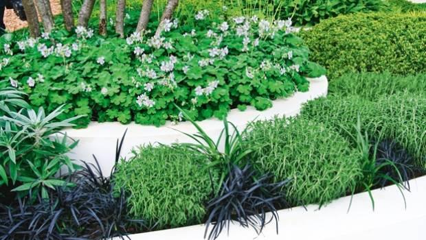 Pretty plants for edging a path   Stuff.co.nz