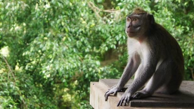 Surfing, spa treatments, mountainbiking and monkeys ... Bali has something for everyone.