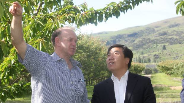 People's Republic of China Consul-General Jin Zhijian talks with councillor Stephen Jeffery at his Roxburgh orchard on ...