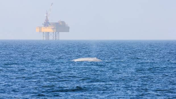Production at the Maari production platform off the Taranaki coast has stopped.