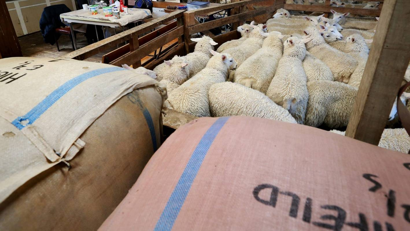 Segard Masurel Expands Direct Wool Buying In The South