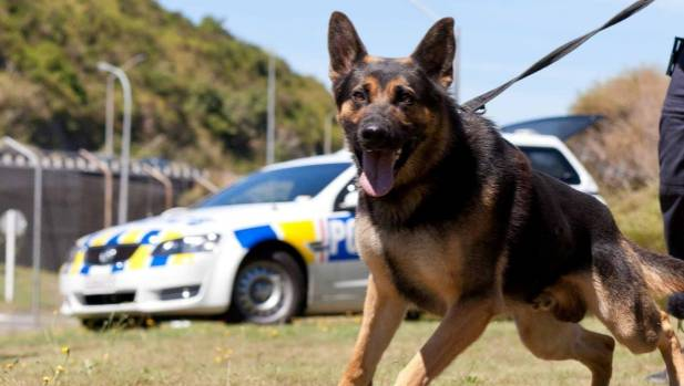 how to get an ex police dog