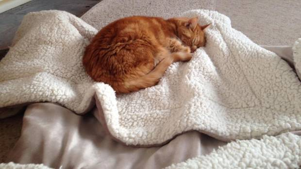 Mikey, too, has crossed the Rainbow Bridge. Not forgotten, though.