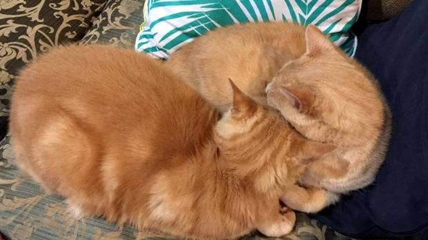 Ginger and Murphy morph into each other.