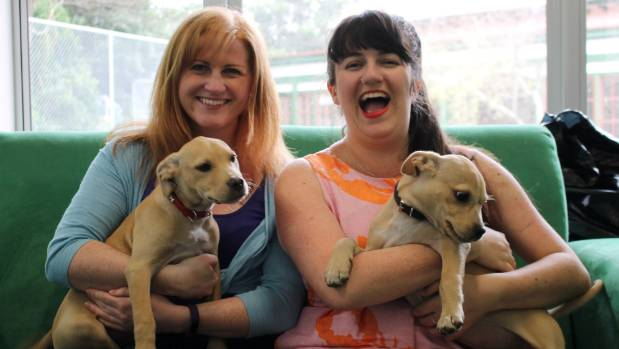 Can You Cuddle Dogs At Rescue Centres