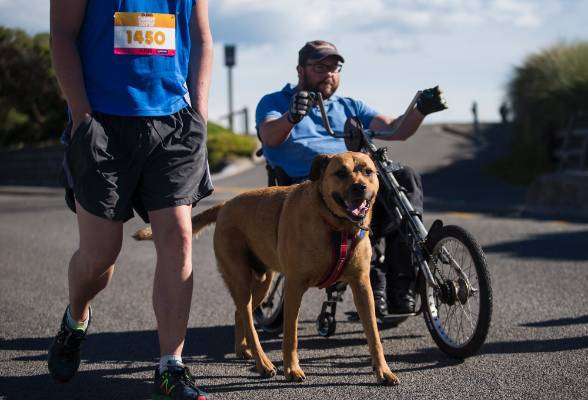 Pets were prevalent with their owners running in the event.