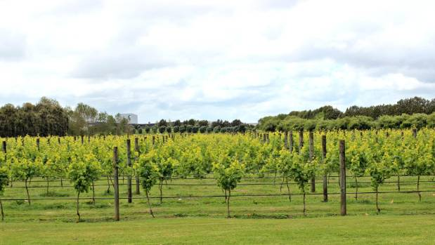 Villa Maria vineyards in Mangere, South Auckland.