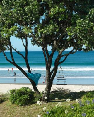 A pohutukawa tree on Whangapoua, a 1.5km-long surf beach.