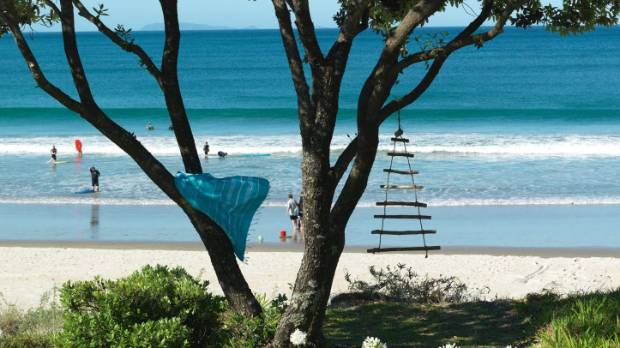 A pohutukawa tree on Whangapoua, a 1.5km-long surf beach.