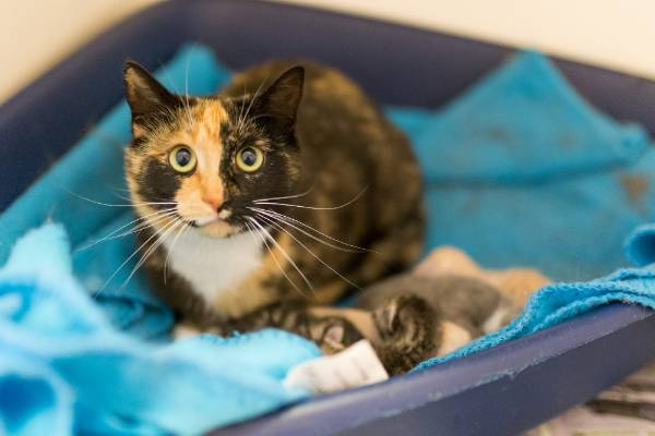 Pepper had just one kitten of her own, but happily adopted the five strays.
