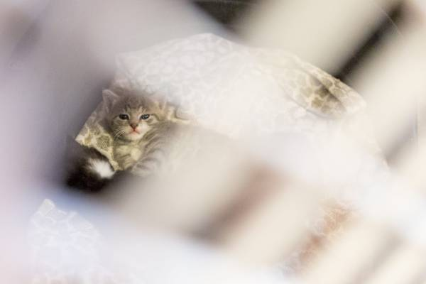 Jackie Poles Smith said the SPCA holds on to kittens for eight weeks and then gets them into a foster home so they can ...