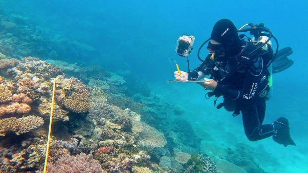 Researcher Grace Frank completes bleaching surveys along a transect line on an area known as One Tree Reef, in the ...