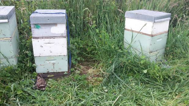 One of 30 beehives used for research was stolen from a Ngaruawahia property on Friday morning.