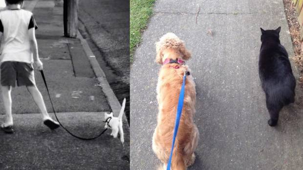 Leashed walks turned out to be a good way for deaf Ginger (left photo) to stay cool in summer and get to know the ...