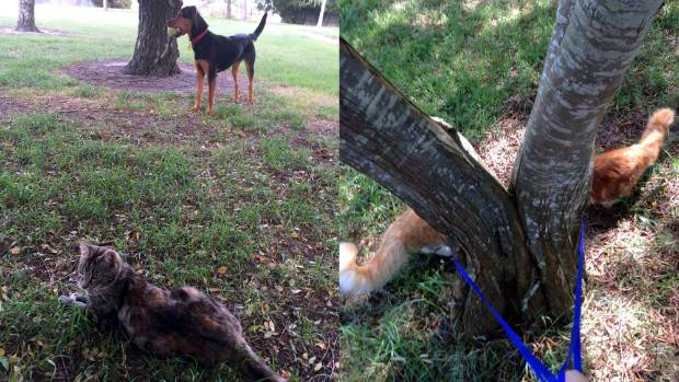 Twiggy the cat (left photo) insists on accompanying Ruby the dog on her daily walk. And finally, look closely: this is ...
