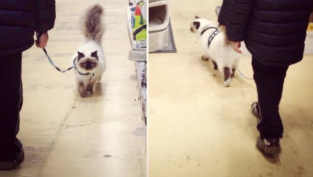 Here's Toffee again, walking in the great INdoors, also known as a pet shop.
