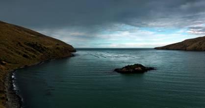 Pukerauaruhe Island, aka Browne's Island, in the Port Levy bay on Banks Peninsula.