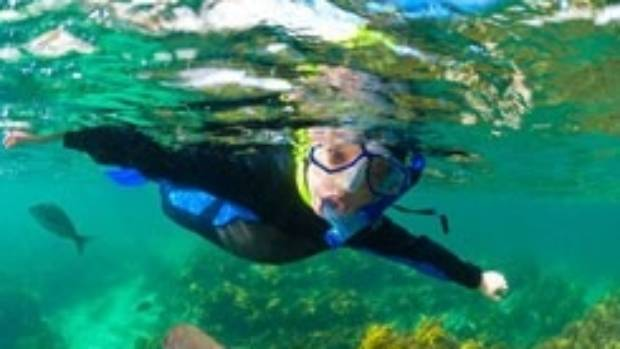 Dive into another world snorkelling at Goat Island.
