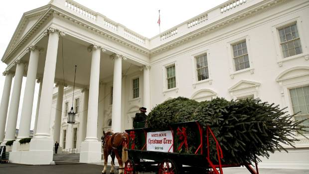 The White House Christmas tree, a 19-foot Balsam fir from Wisconsin, arrives at the White House.