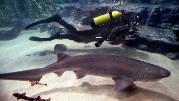 Shark expert Clinton Duffy believes a broadnose sevengill shark is likely responsible for the attack.