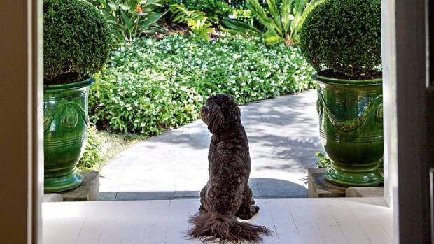 Tux stands watch at the front entrance, framed by buxus topiary and the villa's fretwork.