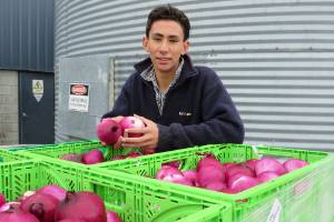 The humble onion earns $112 million a year in export earnings. High school student Lincoln Roper, 16, is the youngest ...