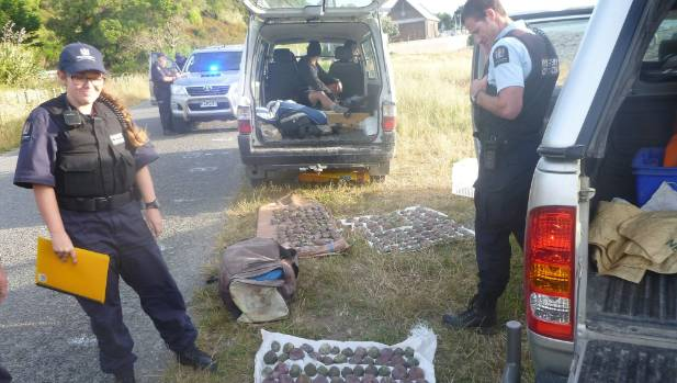 Honorary Fishery Officer Sarah Neighbours and Senior Compliance Officer Craig Wallace were stunned at the 280  paua they ...