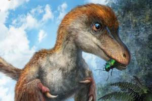 The scientists suspect the tail belonged to a type of two-legged, bird-like dinosaur called a maniraptoran.