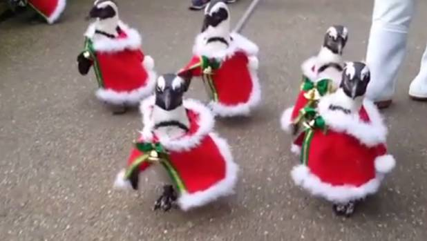 penguins parade in christmas outfits in japanese park stuff co nz