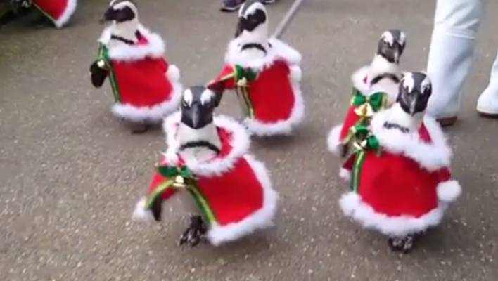 There was mixed reaction on Facebook to the penguins on parade. - Penguins Parade In Christmas Outfits In Japanese Park Stuff.co.nz