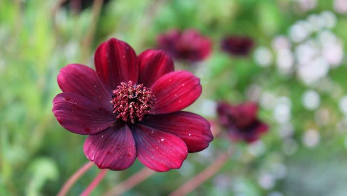 How to: create a red-wine garden | Stuff co nz