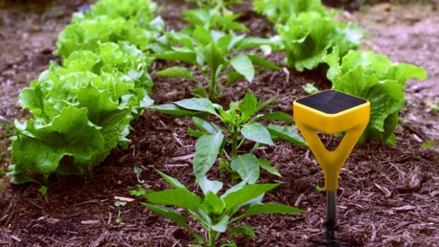 The Edyn Garden Sensor is NZ$137, and it will analyse your garden environment. There's also a Smart Water Valve (NZ$95) ...