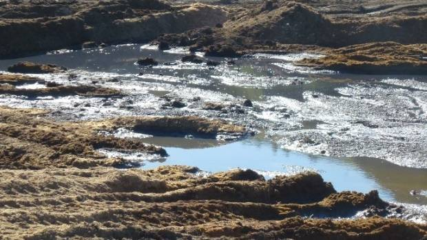 Leachate run-off and ponding from grape marc dump sites in Marlborough.