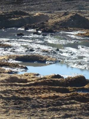 Leachate run-off and ponding from grape marc dump sites in Marlborough. (File pic)