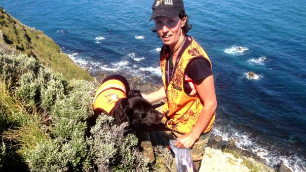 Joanna Sims and her dog Rua on the SW bluffs of Mana Is, 20 November. They had been searching for seabird burrows at a ...