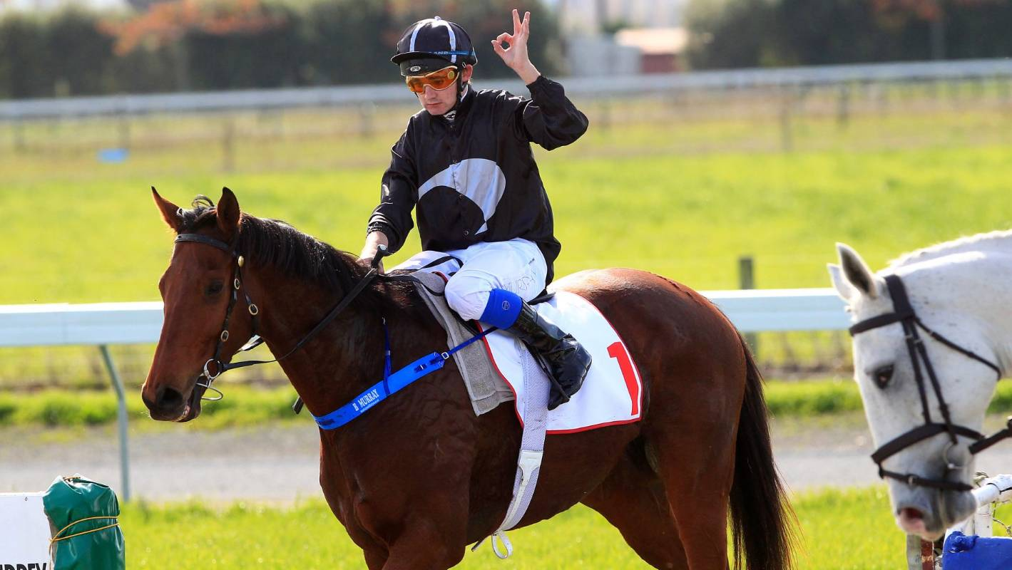 Haworth Trained Mare Fits Big Race Profile Stuff Co Nz
