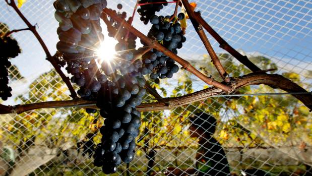 New Zealand law allows for limited mixing of grape varieties and wines from different regions without a notification on ...